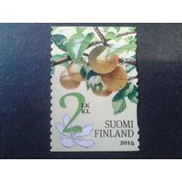 Финляндия 2014 яблоки