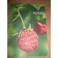 Журнал Юный натуралист 1973 #7