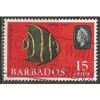 Барбадос. Королева Елизавета II. Рыба-ангел. 1965г. Mi#243.