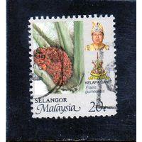 Малайзия.Селангор.Растения.Флора.