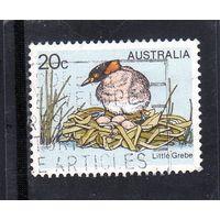 Австралия.Ми-655. Маленький Гребе (Tachybaptus ruficollis). Серия: Птицы. 1978.