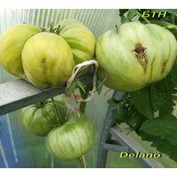 Семена томата Delano