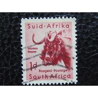 ЮАР. Фауна.