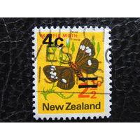 Новая Зеландия. Бабочка.