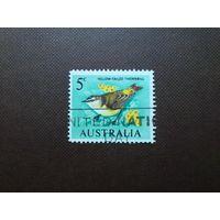 Австралия 1966 г.Желтопоясничная шипоклювка.