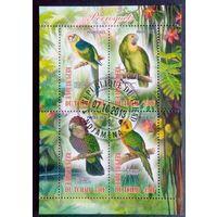 Чад 2013 Фауна Дикая природа Птицы Попугаи