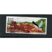 Шри Ланка. Национальный парк. Белобрюхий орлан