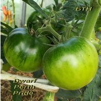 Семена томата Dwarf Perth Pride (Гордость Перта)