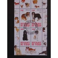 Чад 2010г. Собаки.