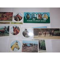 Набор открыток СССР,  Такие разные кони