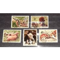Корея КНДР 1984 Фауна Дикая природа полная серия 5 марок (5-я марка - из блока)