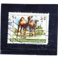 Ливан.Ми-1024. Верблюд дромадер (Camelus dromedarius). Серия: Животные и рыбы.1968.