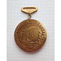 Медаль чемпион Беларусь
