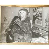 """Фото обезьянки. """"Алле, вы меня слышите!!!"""""""