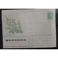 КОНВЕРТ не прошедший почту. Рисунок - Полынь горькая (на бел мове) 1996 год