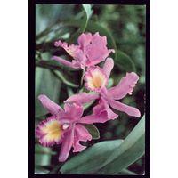 Вьетнам Орхидея 2