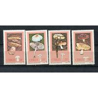 Сискей (Южная Африка) - 1987 - Грибы - [Mi. 110-113] - полная серия - 4 марки. MNH.