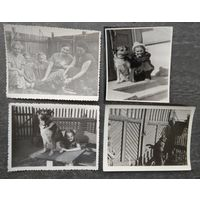 Собака - друг человека. 1960-е. 5 фото. 9х12 см