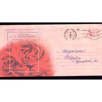 2004 год Розы 497