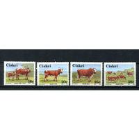 Сискей (Южная Африка) - 1987 - Крупный рогатый скот - [Mi. 115-118] - полная серия - 4 марки. MNH.