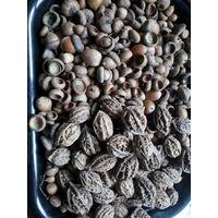 Жёлуди орехи