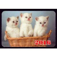 1 календарик 2016 год Котята