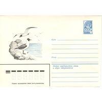Конверт СССР, Озёрная чайка, 1982 Фауна