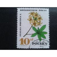 Польша 1967 цветы