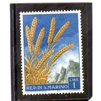Сан Марино. Mi:SM 594. Колосья зерна (Triticum aestivum) Серия: Фрукты и сельскохозяйственные продукты. 1958.