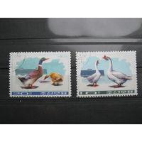 Марки - фауна, Корея, птицы ,утки гуси