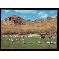 Монголия Река Богдын гол