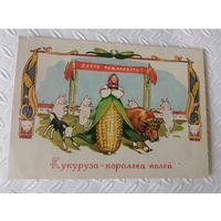 Кукуруза - королева полей.