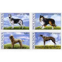Молдова Молдавия 2006 Собаки Фауна 0592-0595 Серия марок **