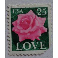 США.роза
