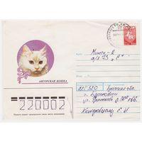Конверт СССР, прошедший почту. Ангорская кошка