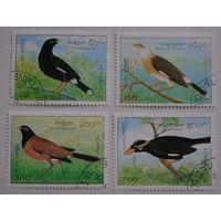 Лаос.1995.птицы