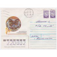 Конверт СССР, прошедший почту. Персидская голубая кошка