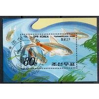 Блок Корея 1991. Рыбы