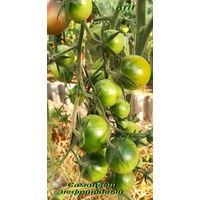Семена томата Самоцвет нефритовый