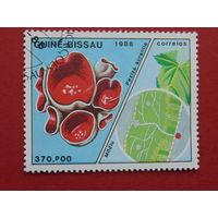 Гвинея-Бисау 1988г. Медицина.