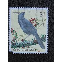 Новая Зеландия. Птицы.