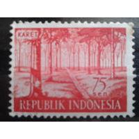 Индонезия 1960 лес*