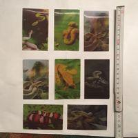 Магниты змеи рептилии переливчатые переливашки объемные Магнитики на холодильник Набор 8 Шт