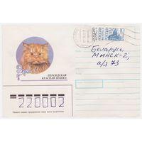 Конверт СССР, прошедший почту. Персидская красная кошка
