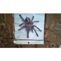Наклейка на автомобиль паук