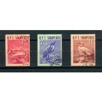 Албания 1961г, птицы, 3м.