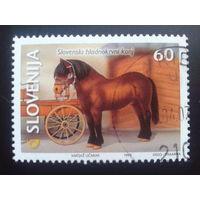 Словения 1999 конь