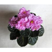 Фиалка  ален -розовый  акрил \лист \