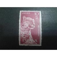 Сахара 1960 колония Испании леопард