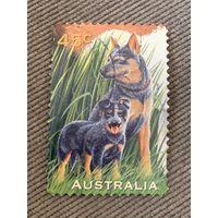 Австралия 1996. Собаки. Марка из серии